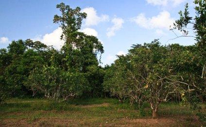 Belize Real Estate-80 Acres on