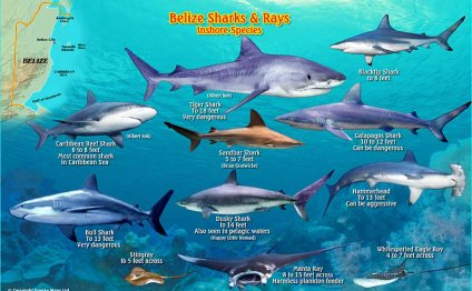 Belize Dive/Fish ID Cards of