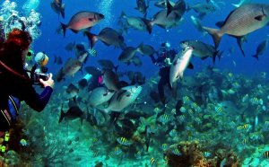 Belize City Scuba Diving